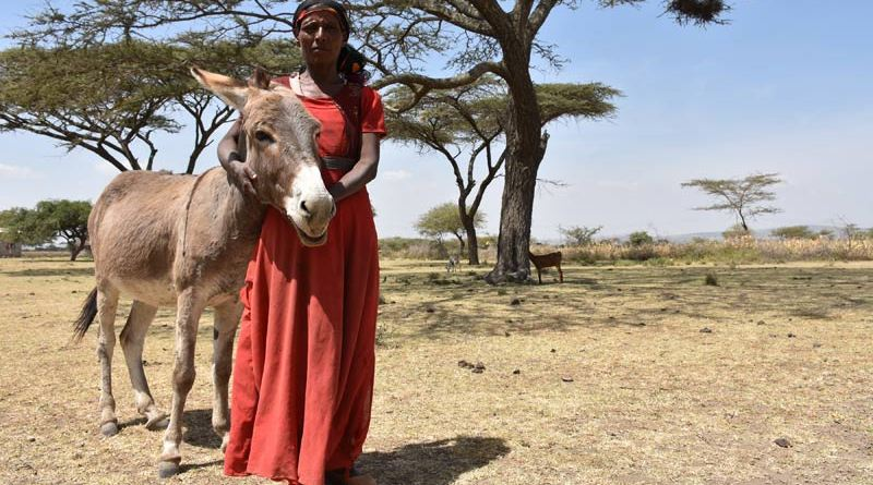 Ethiopian cattle farmer Samuna with her donkey.