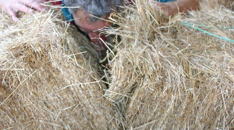 A farmer inspects the quality of his hay. Photo: File