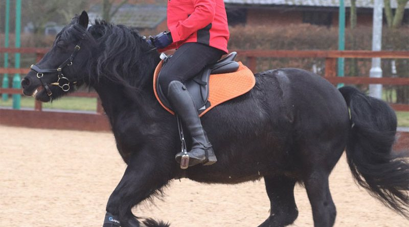 The rider has legs which are too long for the saddle, so his knees are over the front of the saddle flaps.