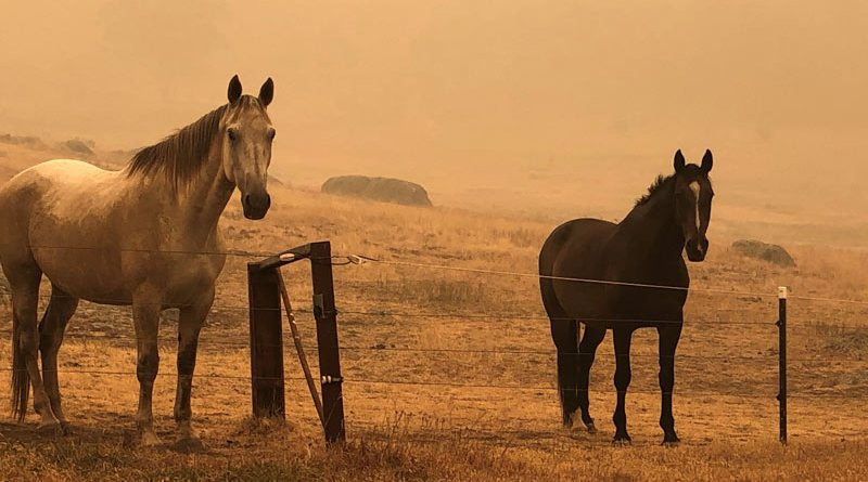 Millions of animals have been affected by the devastating bushfires in Australia. © Equestrian Fire Relief Australia Fund