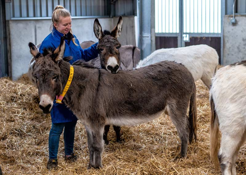 Rehoming Unit Supervisor Kerry Layton-Hill with some of the students at The Donkey Sanctuary's new facility in Devon.