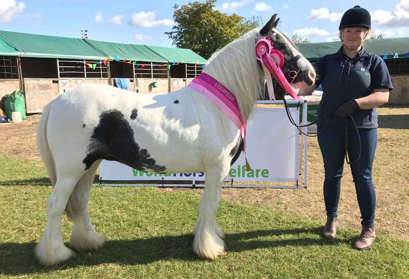 Buttercup is unrecognisable from the rescued pony of more than a year before. She won a championship title at Equifest in late 2019.