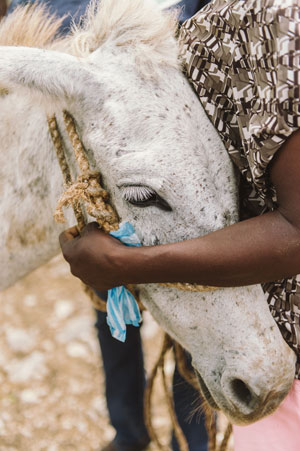 Funds raised in the appeal will support training projects to help improve the care of working equines in Haiti.