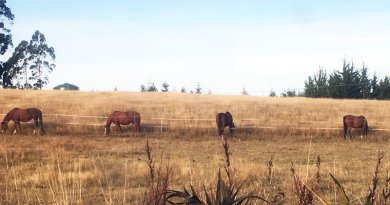 Strip-grazing best to keep horses trim, study finds