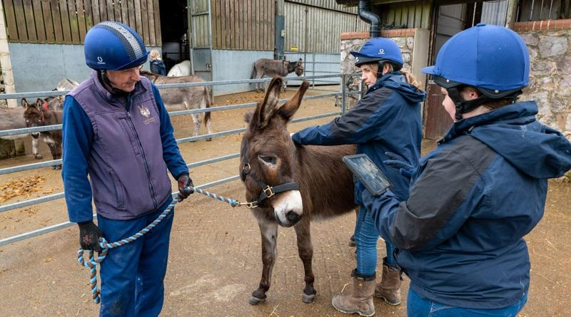 Staff at The Donkey Sanctuary assess the welfare of one of their donkeys using the EARS tool.