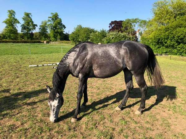 Keeping weight off horses is among the biggest worries for British horse owners during lockdown.