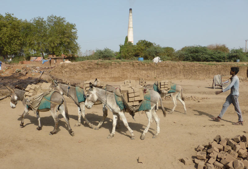 The welfare of donkeys and their owners in the brick kiln industry in India has been highlighted in a scientific article published in Frontiers in Veterinary Science.