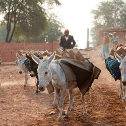 Donkeys at work at a brick kiln in India. © Crispin Hughes/The Donkey Sanctuary