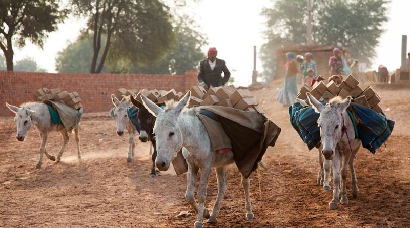 Donkeys at work at a brick kiln in India.