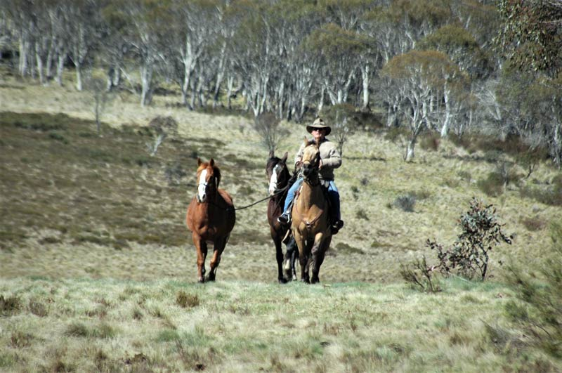 Kosciuzko National Park guide and brumby advocate Peter Cochran with the horses we rode to see the area's wild horses.