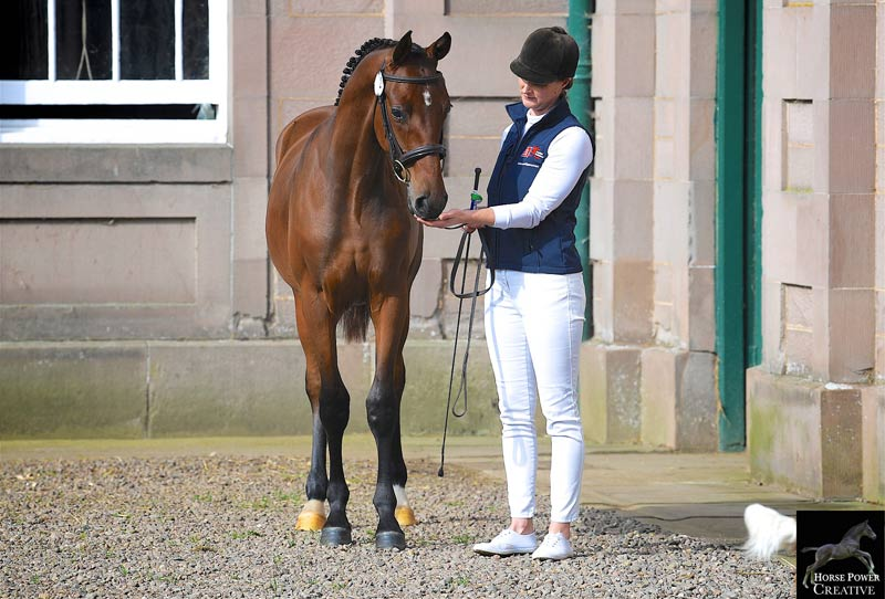 Online auctions deliver an accessible and convenient way of promoting quality youngsters, British Breeding director Jane Marson says.