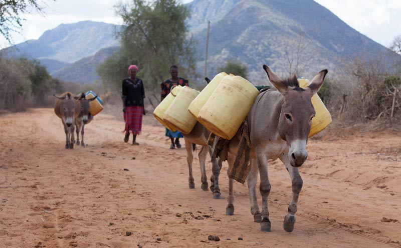 Donkeys take on the heavy burden of carrying water and firewood for their owners in many countries.