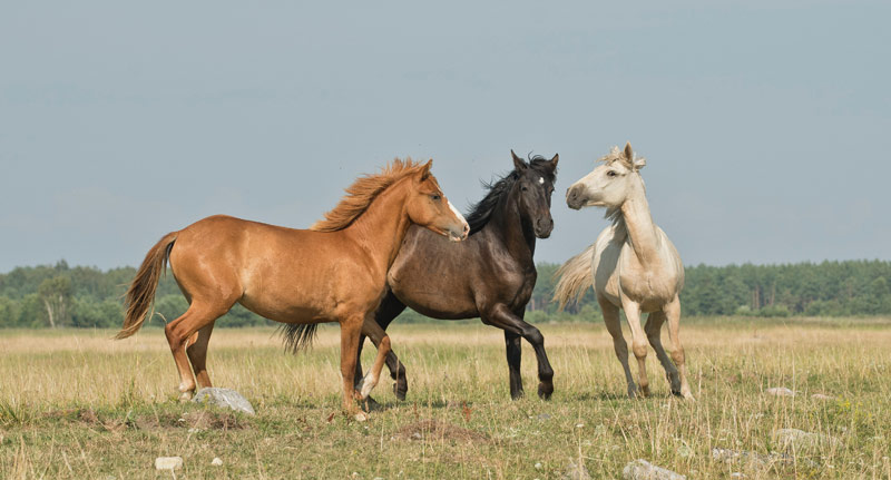 West Nile Virus and Tick-Borne Encephalitis Virus are now endemic among horses and donkeys in eastern Austria, researchers report.
