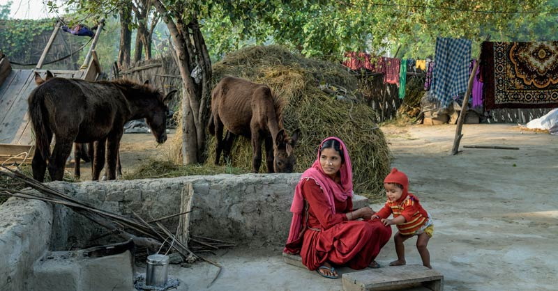 """""""Animals play a significant role in food security, water security and improved income, benefitting the most vulnerable communities in low and middle income countries,"""" says Brooke's Joseph Nhan-O'Reilly"""