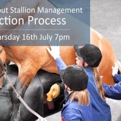 Stallion management webinar focuses on semen collection