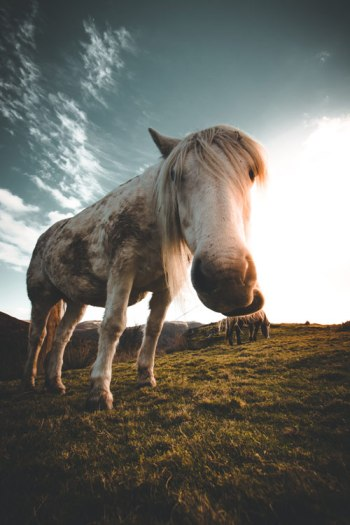 Horse enthusiasts and practitioners face challenges when attempting to gather information on training, management and behaviour.