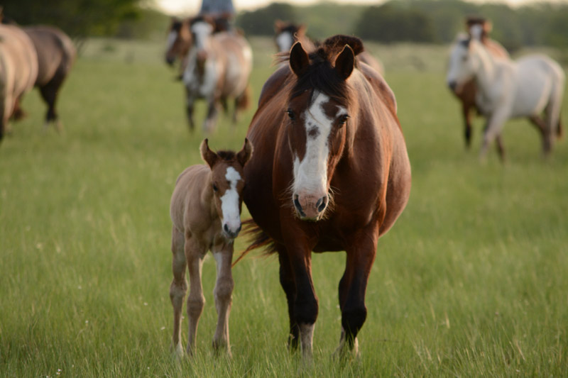 Changes in management and nutrition can help you improve the health of your mare and reduce early development problems in foals.