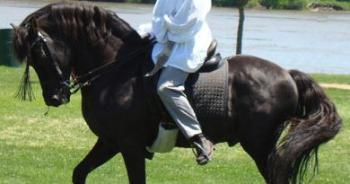 Morgan horse breed's famous founder memorialised