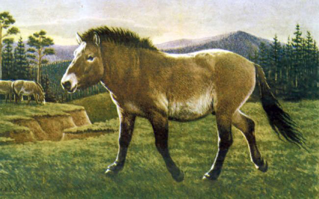 An artist's impression of the Ice Age horse.