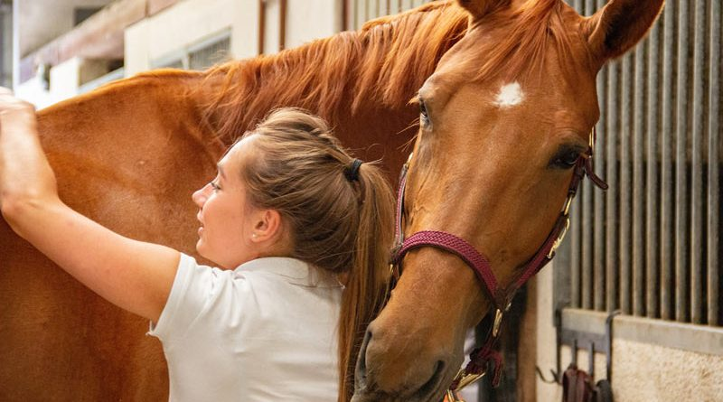 The researchers wanted to link the scratching of a horse once a day for a minimum of three to five minutes to existing routine behaviour.