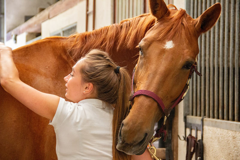Educational strategies may prove important in safeguarding recreational horse welfare, according to researchers.