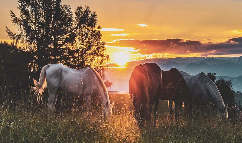 Researchers, in a study conducted at the Free University of Berlin, set out to investigate whether the stress level was different between horses with different causes of colic pain and, therefore, demanding a different treatment strategy.
