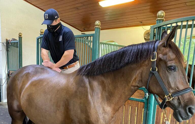 Dr Ryan Lukens performing a veterinary chiropractic adjustment to a horse's pelvis.