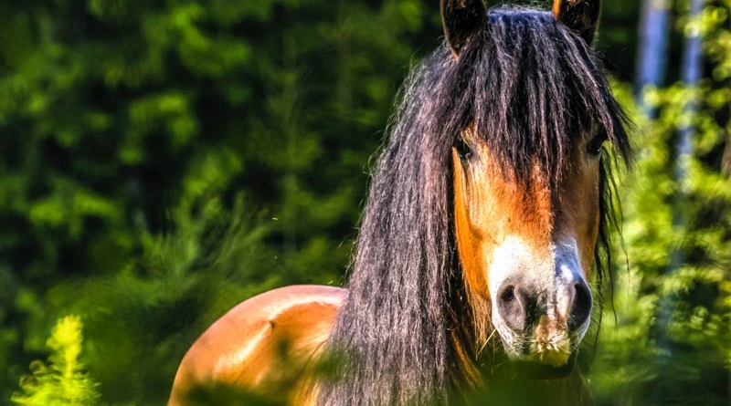 A webinar from the American Horse Council will discuss Helping Horses At-Risk and In Transition.