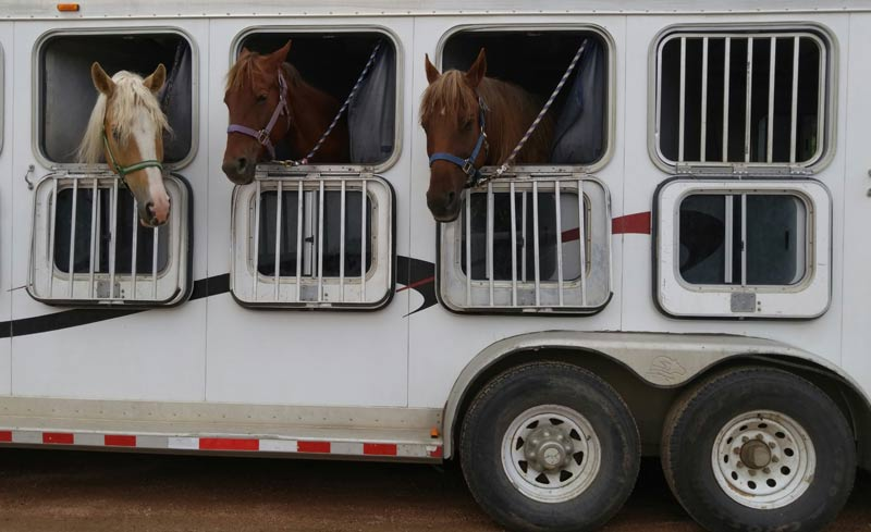 The European Union Animal Health Law (AHL) came into force on Wednesday, April 21, following extensive lobbying by the specially convened International Horse Sports Confederation (IHSC) Task Force.