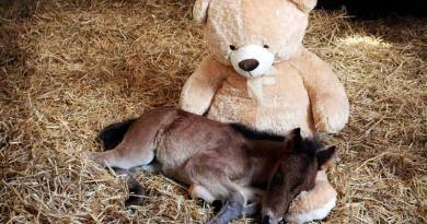 In it for the long haul: Life-long care provided by Mare and Foal Sanctuary
