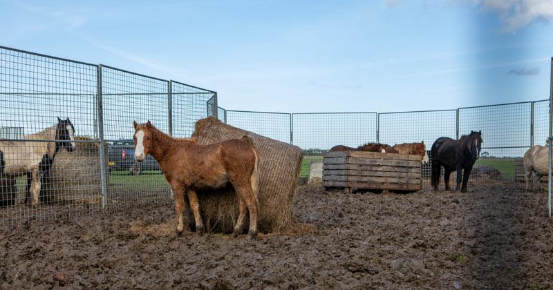 World Horse Welfare led a major operation to help 72 horses on a Cambridgeshire property.