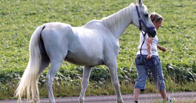 National survey explores the management and health of older horses in the US