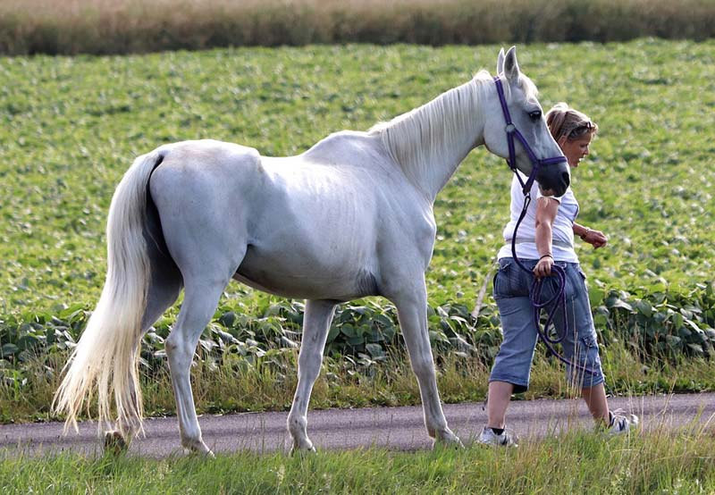 Surprisingly little is known about the management and health status of horses over the age of 15, even though they make up a significant portion of the equine population.