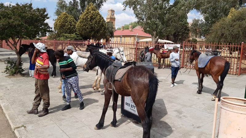 The discipline of Indigenous Horse Riding has been created and affiliated with the South African Equestrian Federation. It is open to any type of traditional or cultural horse sport.