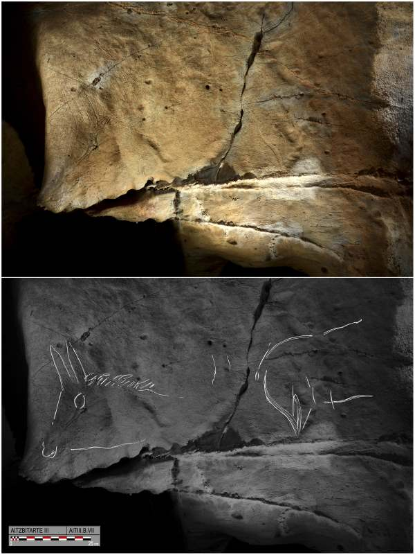 A photograph and tracing on the panel dubbed B.VII at the bottom of the ramp in Aitzbitarte III Cave: At right is an indeterminate animal. Next, a couple of small lines depict bovid horns. At right is the front of a horse, with its muzzle represented in the rock. Photo: O. Rivero and D. Garate
