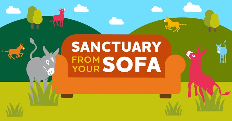 """The Donkey Sanctuary residents were able to bring a """"donkey fix"""" to their fans during the Covid-19 lockdown."""