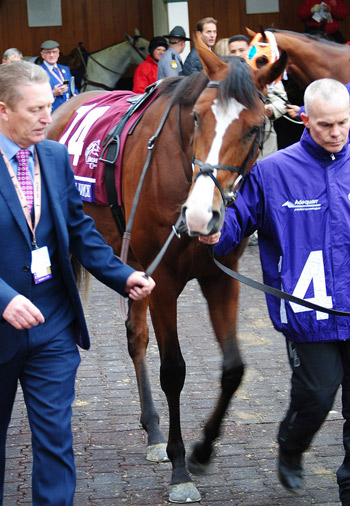 Anthony Van Dyck pictured before the 2018 Breeders' Cup Turf at Churchill Downs in Kentucky.