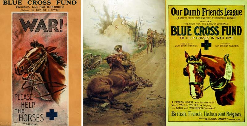 """The Blue Cross Fund"" raised funds to build animal hospitals and ambulances for use during WW1."