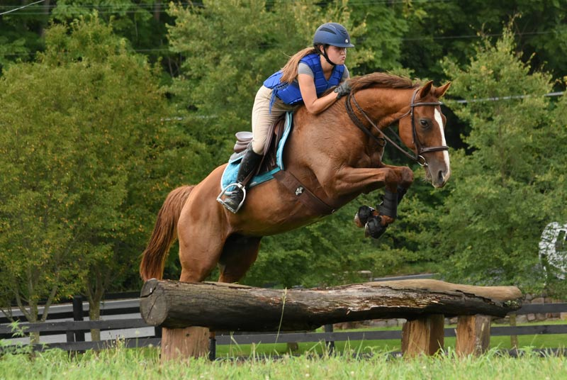 Quizzical Quartz is thriving as a sport horse with Devon Griffin.