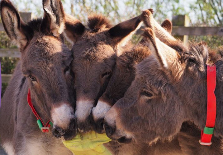 A new weekly Lottery to help donkeys in greatest need in the UK and worldwide has been launched by international animal welfare charity, The Donkey Sanctuary.