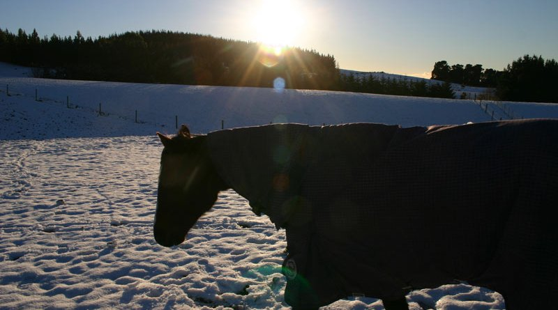 Dry matter intake in blanketed horses during winter was equivalent to an average of 1kg lower a day, a study in Wisconsin has found.