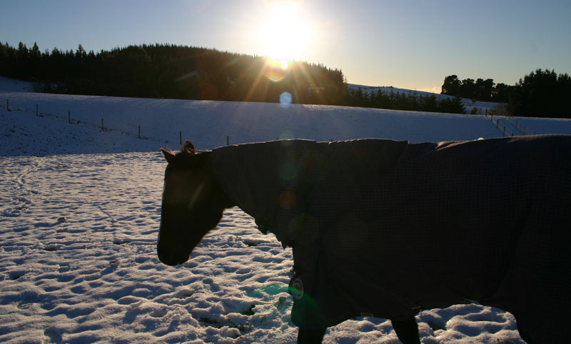 Does your horse really need a rug in winter?