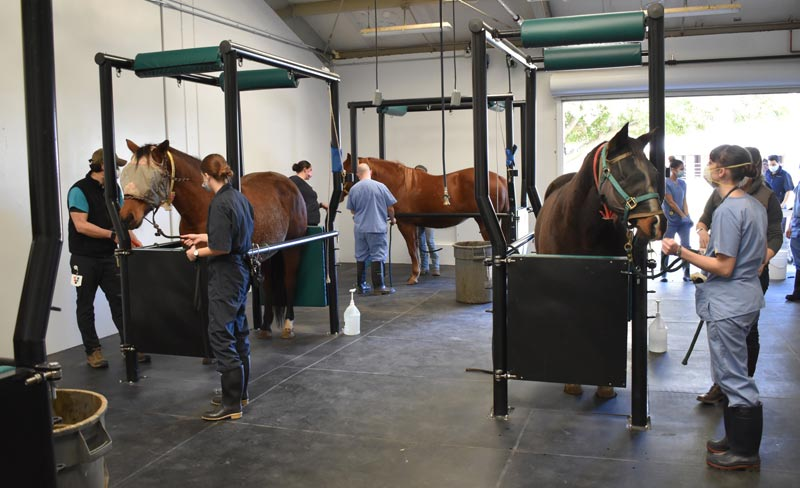 UC Davis DVM students working in the new equine reproduction facilities at UC Davis's Center for Equine Health.