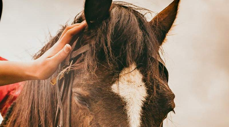 A range of actions could be put in place before, during and after veterinary school to address the wellbeing issues, researchers suggest.