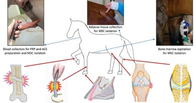 Beyond laminitis: The potential of regenerative medicine to deliver better outcomes