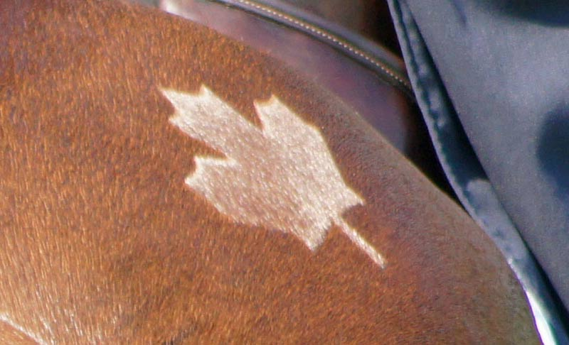 The Court of Arbitration for Sport has dismissed an appeal by Nicole Walker and Equestrian Canada.