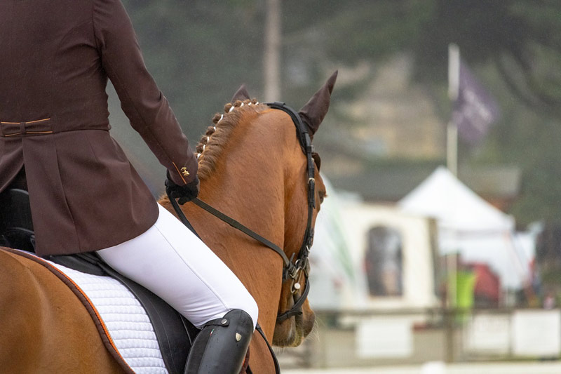 Novice riders differ from experienced riders in their posture, synchronicity and balance