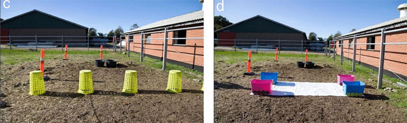 Learning and novel object tests with the five-month-olds, left, and the yearlings at right, which was similar to the 5 months test, except without the mare present.