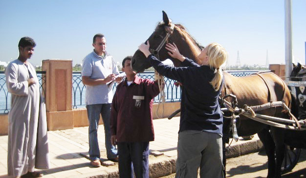 An owner observes with interest as his horse is assessed in Egypt. Assessors can provide immediate feedback and advice, and owner engagement is an important part of the process.