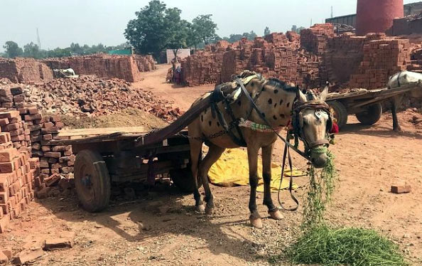 A horse working at a brick kiln factory in India.